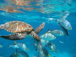Underwater LifeExplore Thailand and Malaysia aboard the exceptional 621