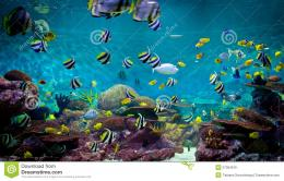 Fishes and coral, underwater life, undersea scene 797