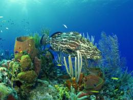 Download Bass fish underwater life Wallpaper in high resolution for 579