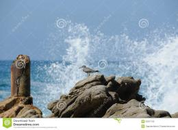Sand Piper Waves Breaking On Rocks Stock PhotographyImage: 23971192 1918
