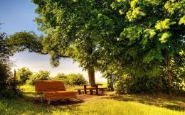 Sunny day Bench Wallpapers Pictures Photos Images 880
