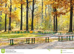 Garden benches in urban park in sunny autumn day 983