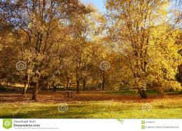 Bench In The Autumn Park Stock PhotoImage: 61555674 1339