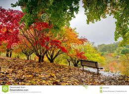 Autumn Park During The Rain Stock PhotoImage: 58753301 303