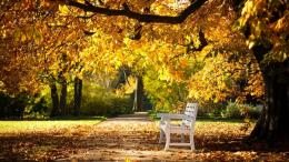 Similar wallpapers for Park Autumn Bench 142