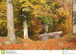 Wooden Bench In The Woods Royalty Free Stock ImageImage: 34649896 585