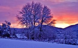 Winter Sunset Snow Trees Landscape Wallpaper, Nature Landscape 1160
