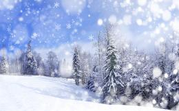 Winter forest scenery Wallpapers Pictures Photos Images 1106