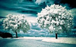 winter wallpaper nature landscape wallpapers 2560x1600 653