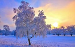 high quality 1920 x 1200 Beautiful Winter Landscape Wallpaper 1311