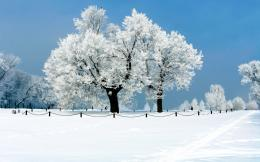Desktop Exchange wallpaper » Nature pictures » Winter wallpapers 637