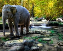 Similar wallpapers for Majestic elephant in the stream 713