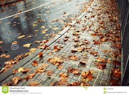 wet road covered with brown and yellow leaves on an autumn rainy day 1222
