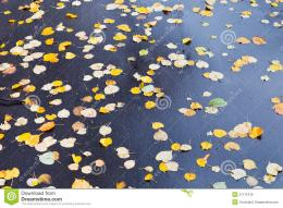 Yellow falled leaves on wet asphalt road in autumn day 1401