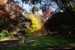 Urban Safari : Arnold Arboretum Fall 2013 | RainyDayMagazine 245