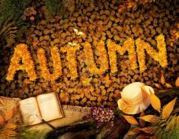 fall background with text in beautiful yellow forest vintage design 1249