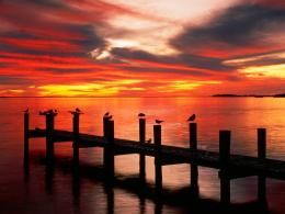 Seagulls at Sunset Florida Wallpapers | HD Wallpapers 1335