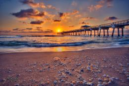 juno beach pier sunrise jellyfish on beach with shells jpg 171