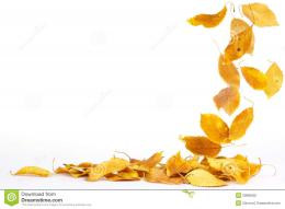 Falling Autumn Leaves Stock PhotographyImage: 20885802 233