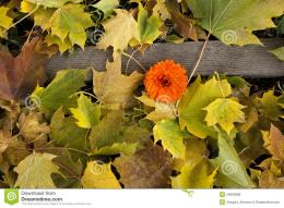 Fall Leaves On Ground With FlowerRoyalty Free Stock ImageImage 395