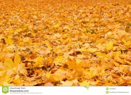Fall Orange Autumn Leaves On Ground Stock ImagesImage: 16706834 1408