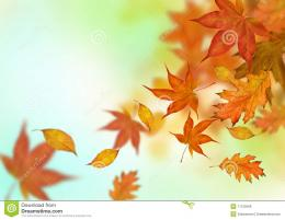 Autumn Leaves Falling Royalty Free Stock ImageImage: 11122566 540