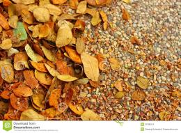 Autumn Leaves Fall On The Ground Stock ImagesImage: 33198314 580