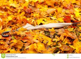 Autumn Leaves On The Ground Royalty Free Stock PhotographyImage 1505