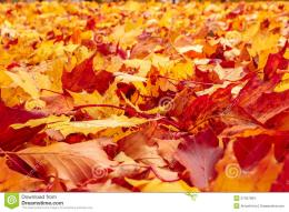 Fall orange and red autumn leaves on ground for background or backdrop 648