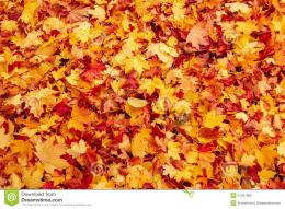 Fall Orange And Red Autumn Leaves On Ground Stock PhotosImage 1601
