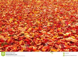 Fall orange and red autumn leaves on ground for background or backdrop 223