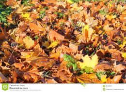 Autumn Or Fall Leaves On The GroundStock ImageImage: 36130941 137