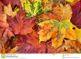 Autumn Fall Royalty Free Stock PhotoImage: 35674005 564
