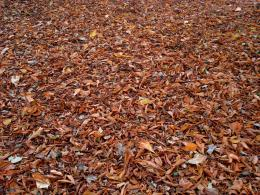 Autumn leaves on the ground | photo pageeverystockphoto 1405