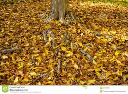Tree Trunk With Many Autumn Leaves On The Ground Royalty Free Stock 1170