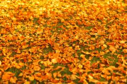 Autumn Leaves On The Ground Free Stock Photo HDPublic Domain 614