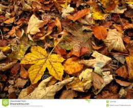 Autumn Leaves On The Ground Royalty Free Stock ImageImage: 12324066 872