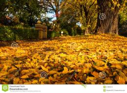 Autumn Leaves Royalty Free Stock PhotoImage: 31682075 1794