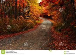 Fall Leaves On The Ground Royalty Free Stock ImageImage: 7546026 1376