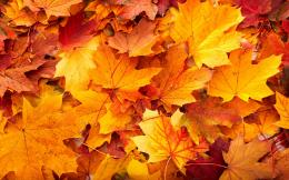 Autumn Leaves On Ground Wallpaper 1141