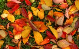 Related For Autumn leaves ground sunset 1153
