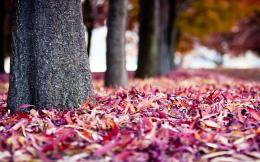 Autumn Leaves Ground Wallpapers Pictures Photos Images 572
