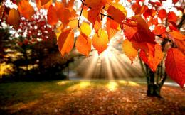 Fall Leaves Wallpapers for Desktop, wallpaper, Fall Leaves Wallpapers 1502