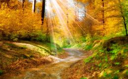 golden autumn leaves yellowforest trees walkway sunlight wallpaper 1995