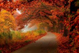 autumn leaves walk nature forest leaves hdr trees park wallpaper 1062