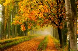 Fall colors walk leaves autumn nature trees road forest park wallpaper 1278