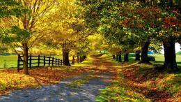 Wallpaper leaves, trees, walkway, fence, Autumn, widescreen on the 1581