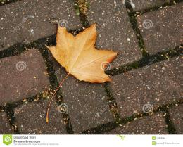 Perfect Orange yellow fall leaf on a brick walkwayLeaves changing 892
