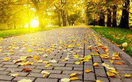 autumn leaves walkway wallpaper 1680x1050 53de746b0843d jpg 1696