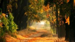 Walk in autumn walkway leaves trees orange 1600x900 1554